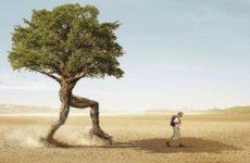 Вы же не дерево! Живите, где вам нравится. Стиль жизни цифровое кочевничество