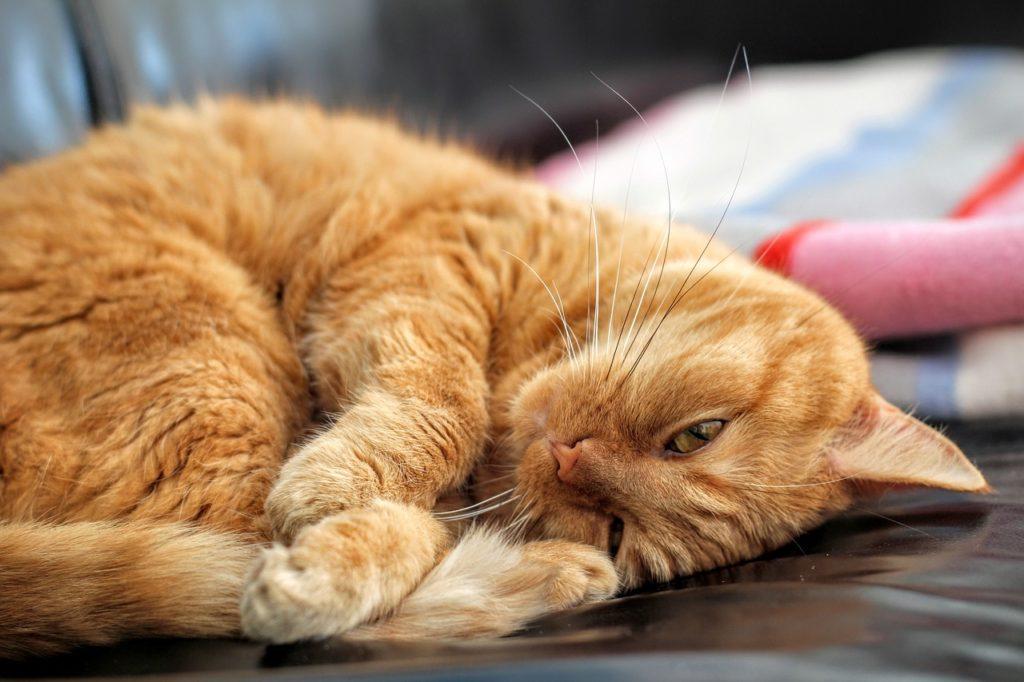 cat-1660967_1280