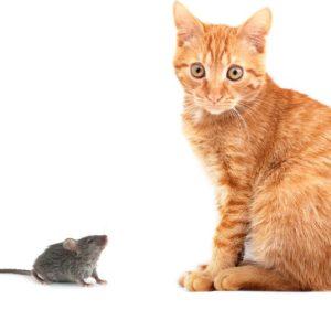 Подруга для Кота. Рассказик